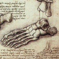 """The human foot is a masterpiece of engineering and a work of art."""