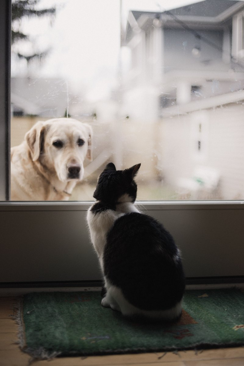 """If animals could speak, the dog would be a blundering outspoken fellow; but the cat would have the rare grace of never saying a word too much."""